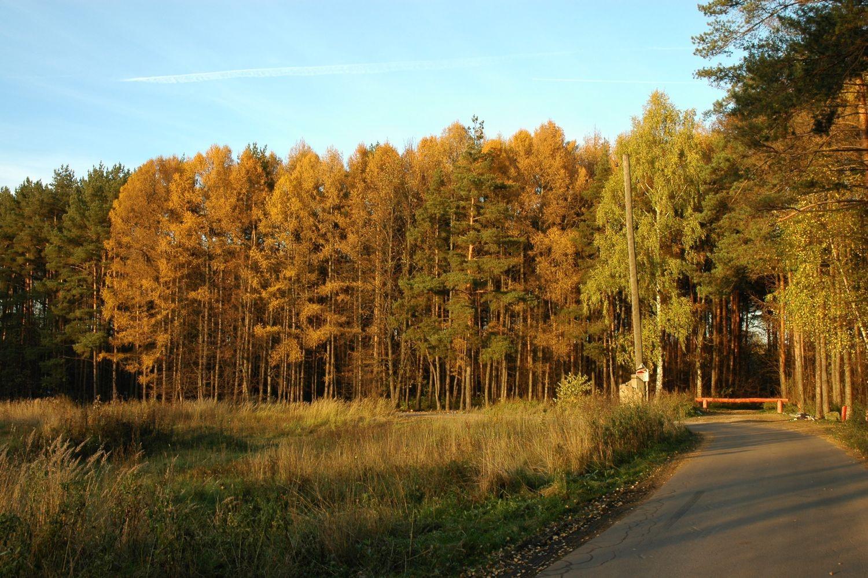 Чоботовский лес осенью 37e4b47078a72